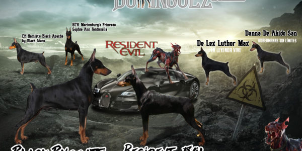 PROXIMAMENTE CACHORROS DISPONIBLESCh.Am.Camp.Mex.Fonticiella Black Buggatti by Hamlet TT x RESIDENT EVIL  (Dominguez)
